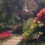 abfotografia_fotografie-4