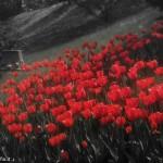 abfotografia_fotografie-7